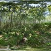 360° Photosphere Photos from Huron Valley National Forest